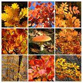 Gold autumn rhapsody