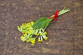 picture of cowslip  - yellow spring primrose cowslip medical flower bunch on wooden table - JPG