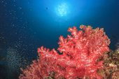 Coral reef and fish in tropical ocean