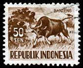 Vintage  Postage Stamp.  Banteng.