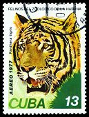 Vintage  Postage Stamp. Wild Big Cats. Tiger .