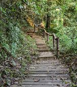 Stairway In The Deciduous Forest