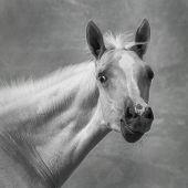 Portrait Of A Foal