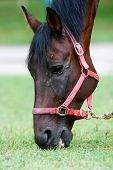 image of horses eating  - A close up of a horse eating grass - JPG