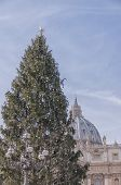 Vatican Christmas Tree