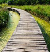 Wooden walkway in park