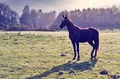 Young Horse At Green Field