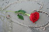 Romatic Beach Rose