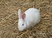 pic of rabbit hutch  - Cute and funny single rabbit standing on dry grass - JPG