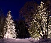 Outdoor Winter Lights 2