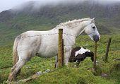 White horse tries to break the fence column.