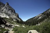 picture of sequoia-trees  - Sequoia National Park - JPG