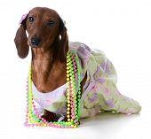 image of dog clothes  - female dog  - JPG