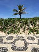 picture of ipanema  - Famous Ipanema beach mosaic sidewalk and palm tree - JPG