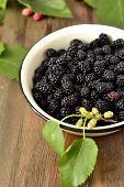 foto of mulberry  - Fresh mulberry in the enameled bowl - JPG