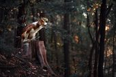 picture of border collie  - Proud red border collie dog in a dark forest - JPG