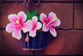 pic of hibiscus flower  - still life flowers Pink Hibiscus flowers in a basket and wall surface - JPG