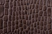 stock photo of alligator  - Brown alligator leather testure close up background - JPG