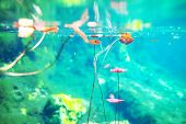image of cenote  - Mexican cenote underwater - JPG