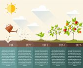 Steps of plant development. Course of events infographic outline