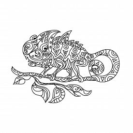pic of chameleon  - Chameleon zentangle coloring page isolated on white - JPG