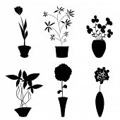 picture of flower pots  - flowers and pot - JPG