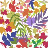 colorful leafs