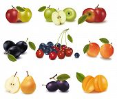 Grupo de diferente sabrosa fruta madura. Vector.