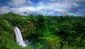 stock photo of bird paradise  - Waterfall in Kauai With Rainbow and Bird Overhead - JPG