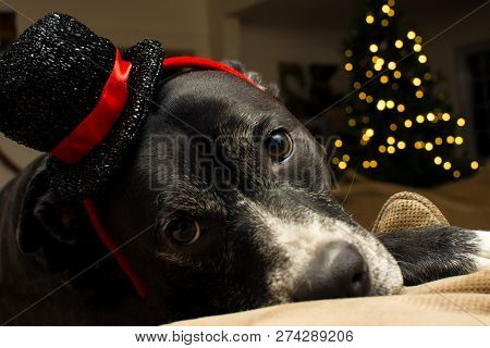poster of Christmas Dog In Holiday Hat New Years Eve Or Christmas Holiday Greeting Card With Room For Copy Spa