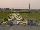 Rice Paddy And Road