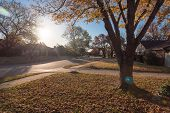 Colorful Residential Area In Fall Season Near Dallas, Texas poster