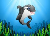 Vector Illustration Cute Killer Whale Under Water poster