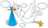 White Stork And Newborn