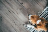 Beagle Dog Peacefully Sleeping On Striped Mat On Laminate Floor. Pets In Cozy Home Top View Image. poster