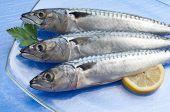 dish of mackerel