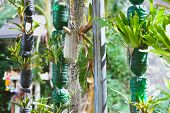 Plant Growing In Recycled Plastic Bottle. Vertical Garden Made By Recycling Container poster