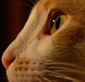 The Boo Radley Cat
