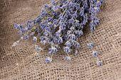 Lavender flowers on sackcloth