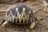 Madagascar's Turtle