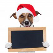 stock photo of christmas puppy  - christmas banner placeholder dog wood board holding - JPG