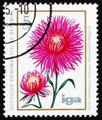 Postage stamp GDR 1975 China Aster, Flower