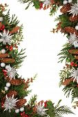 image of scottish thistle  - Christmas decorative border of holly - JPG
