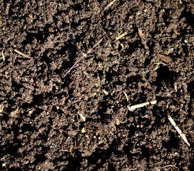 stock photo of loamy  - Loamy soil ready to plant some plants - JPG