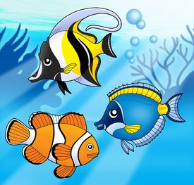 foto of sea life  - Coral fish collection in blue sea  - JPG