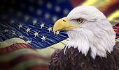 Bald eagle with grungy looking american flag out of focus.