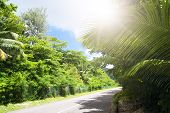 La Digue Island, Seyshelles. Road In Green Jungle.