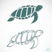 stock photo of green turtle  - Vector image of an turtle on white background - JPG