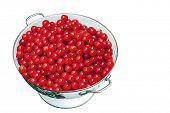 Fresh Cherries in Colander on White