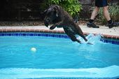 Flying Labrador